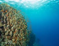 Красивый коралловый риф с sealife Стоковое Изображение