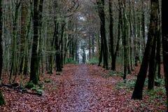 Красивый коричневый лес Стоковое Изображение RF