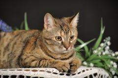 Красивый коричневый кот среди цветков Стоковые Изображения