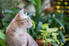 Красивый кот в саде Стоковые Фотографии RF