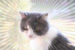 Красивый кот греется в солнце Стоковые Изображения RF