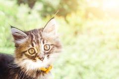 Красивый кот киски в парке стоковое изображение