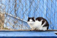 Красивый кот на голубой деревянной предпосылке стоковое фото