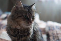 Красивый кот на одеяле Стоковые Изображения