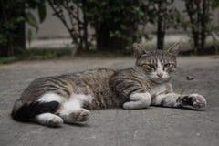 Красивый кот переулка в задворк Стоковые Изображения RF