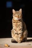 Красивый кот переулка в солнце Стоковые Фото