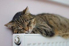 Красивый кот спать в доме на подогревателе Стоковые Изображения RF
