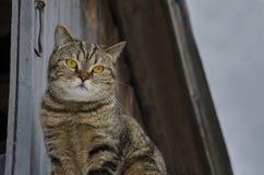 Красивый кот с большими глазами Стоковая Фотография RF