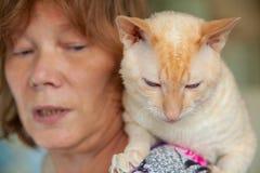 Красивый кот с вьющиеся волосы Стоковые Фото