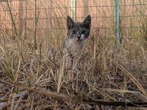 красивый кот стоковые изображения rf