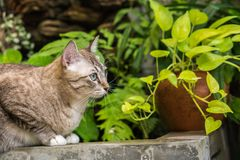 Красивый кот outdoors Стоковое фото RF
