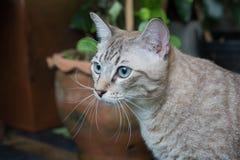 Красивый кот outdoors Стоковые Изображения