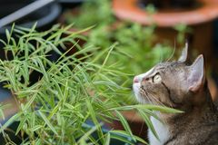 Красивый кот outdoors Стоковые Фотографии RF