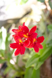 Красивый красный зацветать цветков Стоковые Фотографии RF