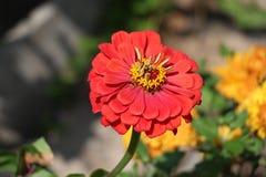 Красивый красный цветок/ стоковая фотография