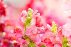 Красивый красочный цветок в саде, красивая природа Стоковое Изображение RF