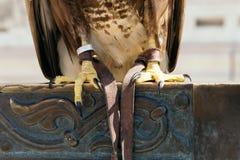 Красивый крупный план птицы орла Стоковое Фото