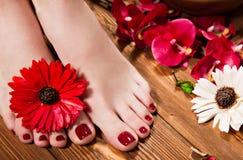 Красивый классический красный pedicure на женской руке Конец-вверх Стоковое Изображение