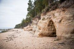 Красивый ландшафт берега песчаника Деревья растя на скалах ar песчаника Балтийское море Пейзаж с пещеры Стоковые Изображения RF