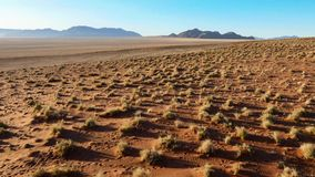 Красивый ландшафт в Kalahari с большой красной дюной и яркими цветами стоковое изображение