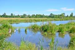 Красивый ландшафт голубое озеро среди древесины в России Сибире стоковые изображения