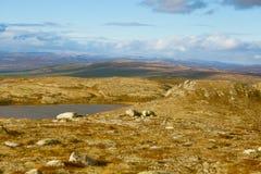 Красивый ландшафт горы с озером в расстоянии Горы осени в Норвегии Стоковое Изображение