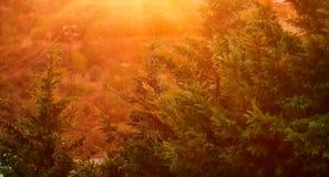 Красивый ландшафт дождя Стоковое Фото