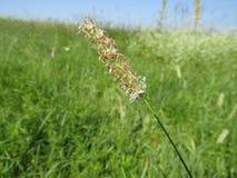 Красивый ландшафт, зеленая трава, поле Стоковая Фотография