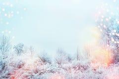 Красивый ландшафт зимы со снегом покрыл деревья, солнечный свет и снег напольно стоковая фотография rf