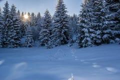 Красивый ландшафт зимы с лесом, деревьями и восходом солнца Утро Winterly нового дня Пурпурный ландшафт зимы с заходом солнца стоковые фото