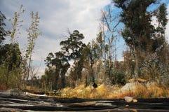 Красивый ландшафт леса в Huila, Анголе стоковое изображение