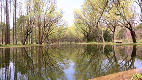 Красивый ландшафт лета, дерево отразил в озере, сезонах изменяет, солнечный день, парк лета, 4k, замедленное движение акции видеоматериалы