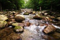 Красивый ландшафт лета реки в одичалой области стоковое изображение