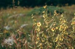 Красивый ландшафт лета с blossoming лугом и весной полевых цветков цветков зацветая Стоковые Фото