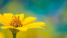 Красивый ландшафт лета с blossoming лугом и цветками одичалый зацветать цветков лета весны Стоковые Фотографии RF