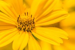 Красивый ландшафт лета с blossoming лугом и цветками одичалый зацветать цветков лета весны Стоковое фото RF