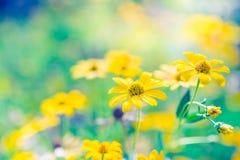 Красивый ландшафт лета с blossoming лугом и цветками одичалый зацветать цветков лета весны Стоковая Фотография