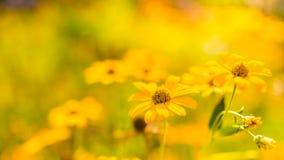 Красивый ландшафт лета с blossoming лугом и цветками одичалый зацветать цветков лета весны Стоковая Фотография RF