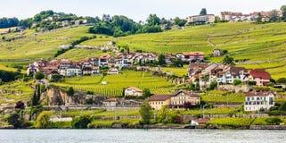 Красивый ландшафт лета террасы виноградника женевского озера, Lavaux и Альпы, швейцарец Ривьера, Швейцария, Европа Стоковое Изображение