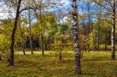 Красивый ландшафт осени в красочном парке города осени на солнечном стоковая фотография rf