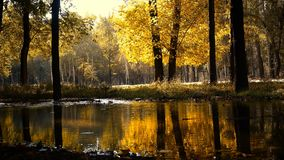 Красивый ландшафт осени прудом акции видеоматериалы