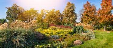 Красивый ландшафт парка осени с красочными деревьями и солнечным светом Деревья и заводы сезона осени стоковая фотография