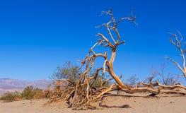 Красивый ландшафт песчанных дюн Mesquite плоских на Death Valley Стоковые Фото