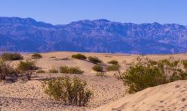 Красивый ландшафт песчанных дюн Mesquite плоских на Death Valley Стоковое Изображение