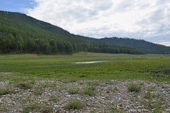 Красивый ландшафт полей и Forest Hills Стоковые Изображения