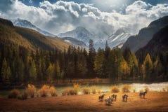 Красивый ландшафт предыдущего леса осени и снежных горных пиков Стоковые Изображения