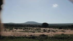Красивый ландшафт природы в Африке Взгляд изнутри moving автомобиля однако проселочная дорога сток-видео