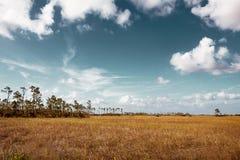 Красивый ландшафт природы с облаками на нации болотистых низменностей стоковые изображения rf