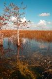 Красивый ландшафт природы с облаками на национальном парке болотистых низменностей в США Популярное место для туристов стоковое изображение
