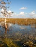 Красивый ландшафт природы с облаками на национальном парке болотистых низменностей в США Популярное место для туристов стоковые фото